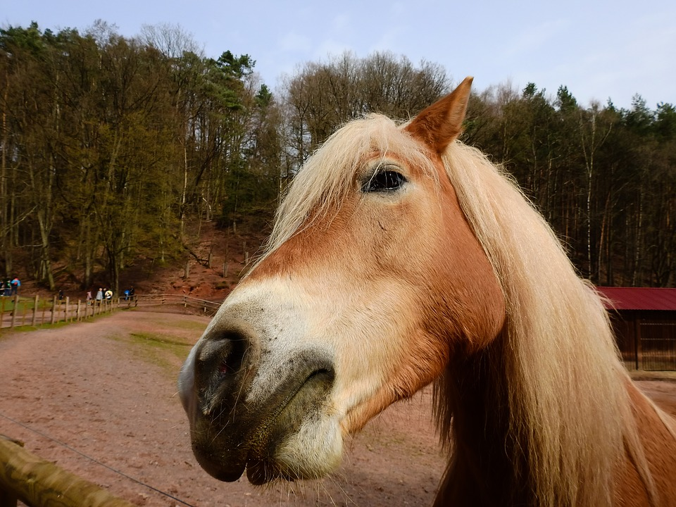 horse-1308142_960_720